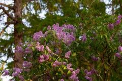 Violette Blumen lizenzfreies stockbild