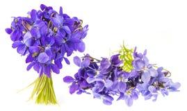 Violette Blumen auf einem weißen Hintergrund Stockfotos
