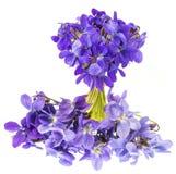 Violette Blumen auf einem weißen Hintergrund Stockfoto