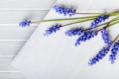 Violette Blumen des Frühlinges auf Holz Stockbild