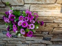 violette Blumen in einem grünen Blumentopf befestigt zur Steinumhüllungswand mit Beschaffenheit stockbild