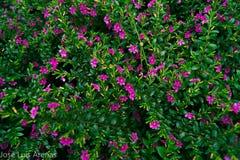 Violette Blumen im Garten Stockfoto