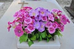 Violette Blumen und Grab Lizenzfreie Stockfotos