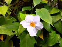 Violette Blumennahaufnahme Stockbild