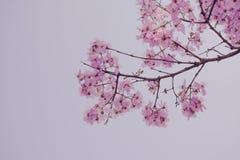 Violette Blumenniederlassung Lizenzfreies Stockbild