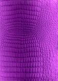 violette de texture de reptile de lumière de cuir artificiel Image libre de droits