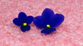 Violette deux sur le sable rose Photo stock
