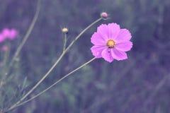 Violette die bloem door gras in het midden van het gebied wordt omringd stock fotografie