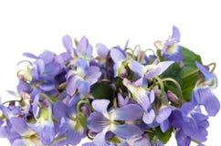Violette en bois Photographie stock