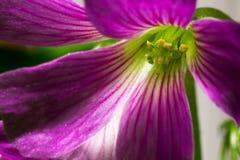 Violette en groene bloem Royalty-vrije Stock Afbeeldingen