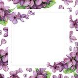 Violette Flieder auf Hintergrund der weißen Blume Stockfotografie