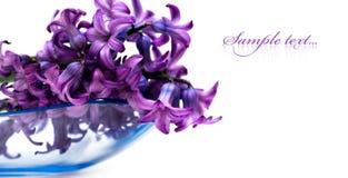 Violette geïsoleerdeg bloemen Stock Afbeeldingen