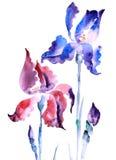 violette iris Royalty-vrije Stock Afbeelding
