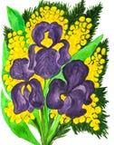 Violette irissen en mimosa Royalty-vrije Stock Afbeeldingen