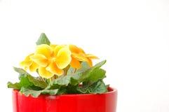 Violette jaune 1 Photo libre de droits