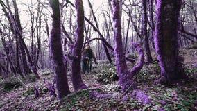 Violette junge Leute gehen des Märchenwald zwei in den magischen purpurroten Wald am sonnigen Tag stock footage