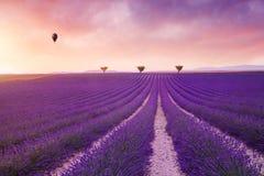 Violette lavendelstruiken De mooie gebieden van de kleuren purpere lavendel royalty-vrije stock afbeeldingen