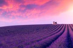 Violette lavendelstruiken De mooie gebieden van de kleuren purpere lavendel royalty-vrije stock foto