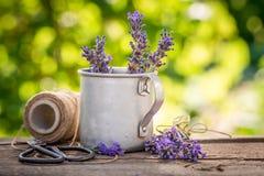 Violette lavendelvoorbereiding voor huis het drogen in groene tuin royalty-vrije stock foto