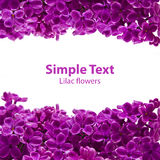 Violette lila Grenzpostkarte Lizenzfreies Stockfoto