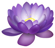 Violette Lotosblumenillustration stock abbildung