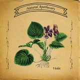 Violette naturelle d'apothicaire Photo stock
