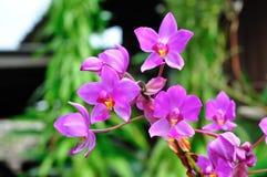 Violette Orchidee Lizenzfreie Stockbilder