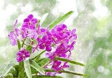 Violette Orchidee lizenzfreie abbildung