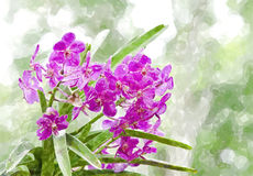 Violette Orchidee Lizenzfreies Stockbild