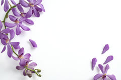 Violette Orchidee auf weißem Hintergrund Lizenzfreie Stockfotos