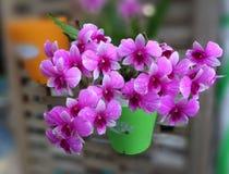Violette Orchidee am Garten Stockfoto