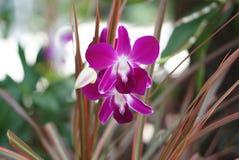 Violette Orchidee im Blumengarten Stockbild