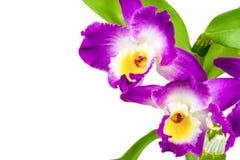 Violette orchideebloem royalty-vrije stock fotografie