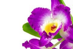 Violette orchideebloem royalty-vrije stock afbeeldingen