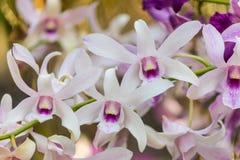 Violette Orchideen blühen Lizenzfreie Stockfotos
