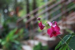 Violette Orchideenblume im Gartenhintergrund, violette Blume b lizenzfreie stockfotos