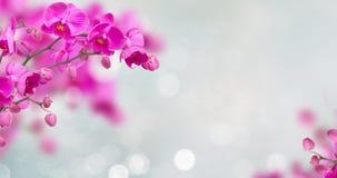 Violette Orchideenblumen mit Schmetterlingen lizenzfreies stockbild