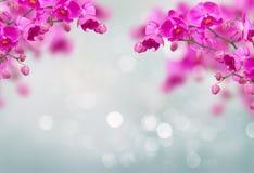 Violette Orchideenblumen mit Schmetterlingen lizenzfreies stockfoto