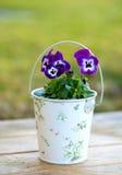 Violette Pansies in einem romantischen Glas draußen Stockfotos