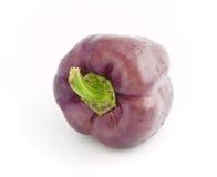 Violette peperklok Stock Foto