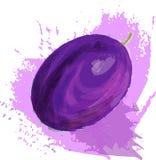 Violette Pflaume vektor abbildung