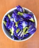 Violette purpurrote Farbblumen von Schmetterling Erbse, asiatische pigeonwings Stockbild