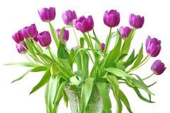 Violette tulpen Royalty-vrije Stock Afbeeldingen