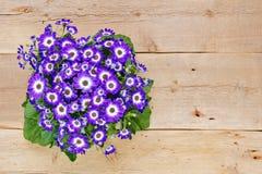 Violette und weiße Blumen über hölzernem Hintergrund Lizenzfreie Stockfotos
