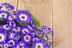 Violette und weiße Blumen über hölzernem Hintergrund Stockfotografie