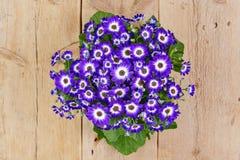 Violette und weiße Blumen über hölzernem Hintergrund Lizenzfreies Stockfoto