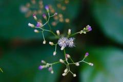 Violette und weiße Blumen in der gleichen Niederlassung lizenzfreie stockbilder