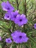 Violette wilde bloemen Stock Afbeelding