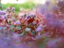 Violette wilde Blumen Lizenzfreie Stockbilder