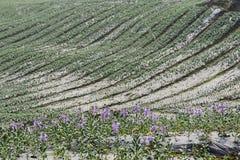 violetter Blumengarten lizenzfreie stockbilder